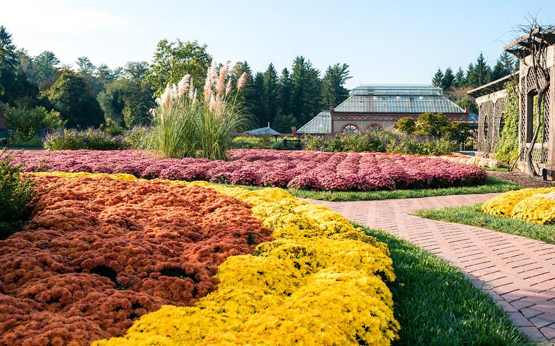 Biltmore Fall Flowers (3 of 3).jpg