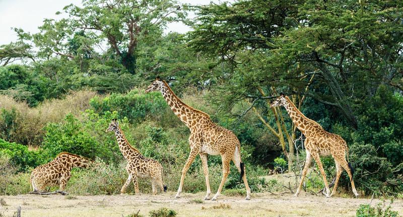 Kenya 2015-10008.jpg