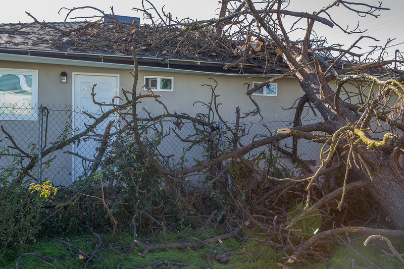 5671 Wallace Ave - Tree 1030am 12 16 2017 Extremly Windy Conditions-16.jpg