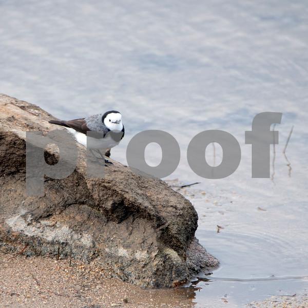 Creel bay bird.jpg