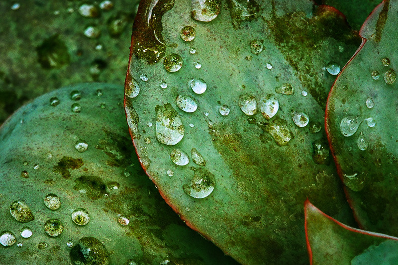 July 1 - Water on leaves.jpg