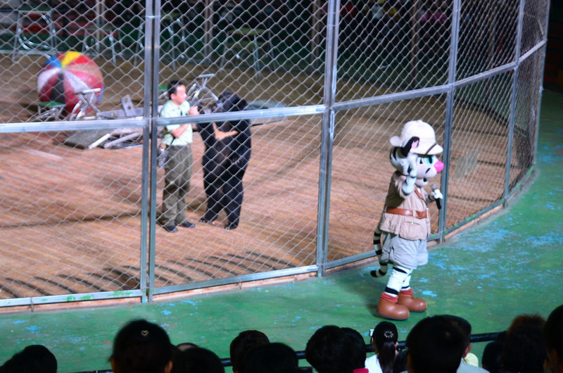 We also saw a white tiger / dancing bear show.