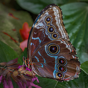 2021 Butterfly Show