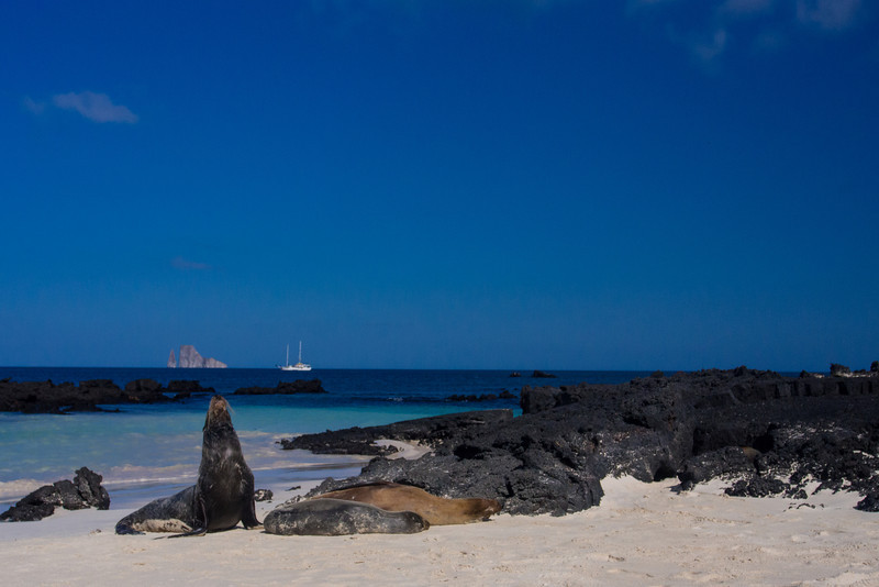 seals and cachelote on beach.jpg