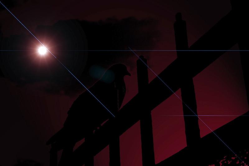 sunbird.jpg