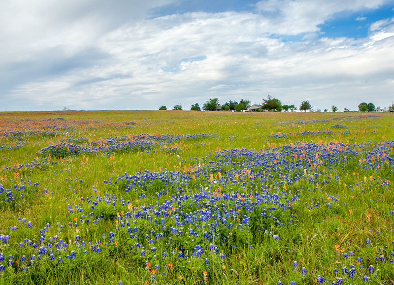 2016_4_9 Texas Wildflower Shoot-8586.jpg