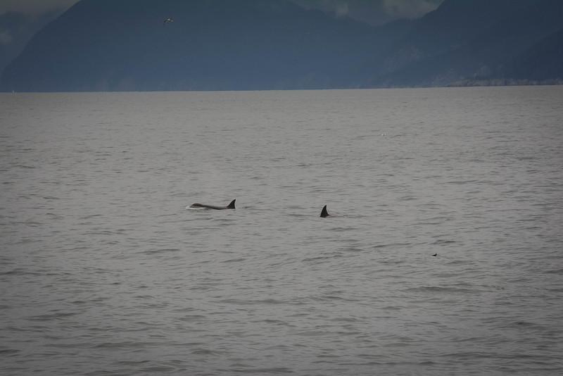 Kenai-Fjords-181.jpg