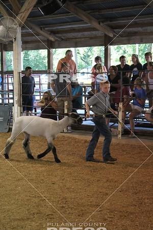 4-H Sheep Show