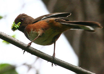 Evergreen Birds 2008