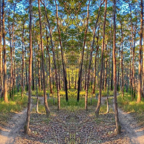 Reflections 8.jpg