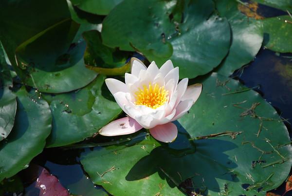 Botanical Gardens, Niagara Parks (August 2011)