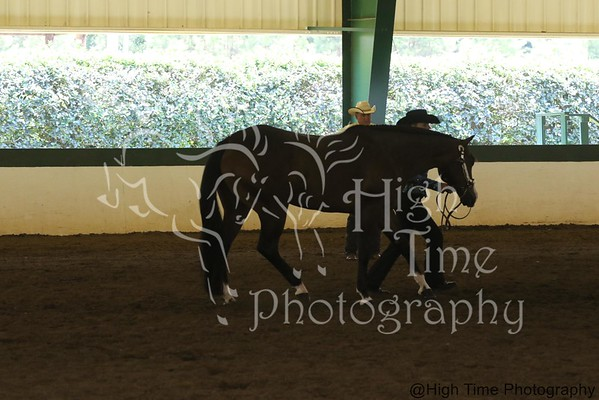 Flat Classes (Multiple Horses in Ring at Same Time)