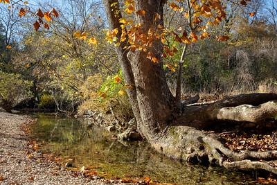 Ozarks Woodland Scenes, Nov. 2020