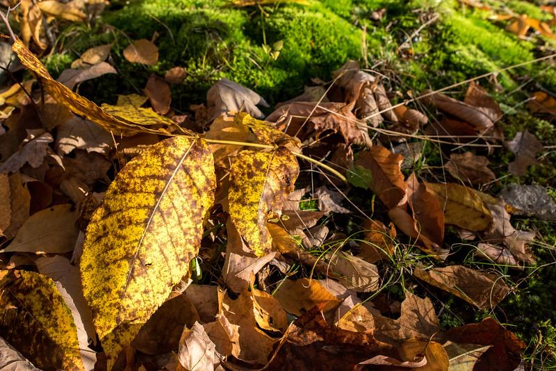 foliage-2014-32.jpg