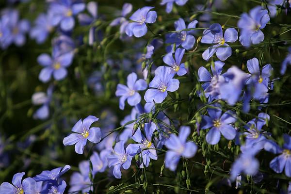 Flowers_060510_0183.JPG