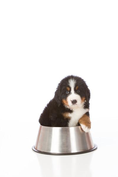 2013-Pearson Pups-Jun02-0344.jpg