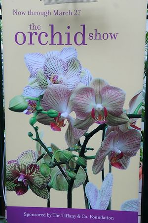 Orchid Show - 2005