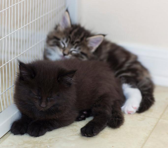 Kittens260.jpg