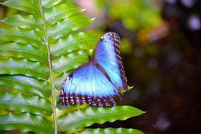 Best of Butterflies & Dragonflies