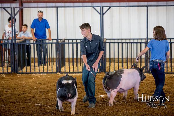 Div 06 Hog Showmanship