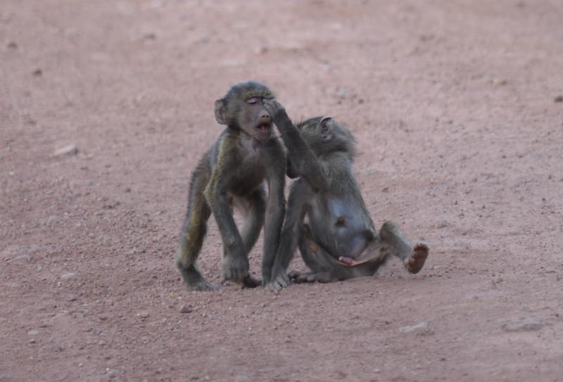 East Africa Safari 450.jpg