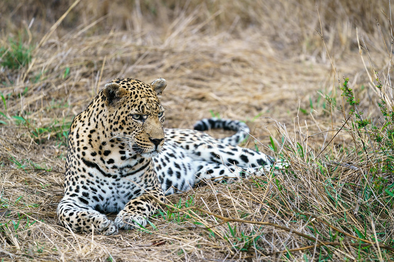 LeopardHills-20171021-0080.jpg