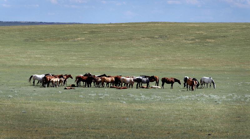 alberta horses.jpg