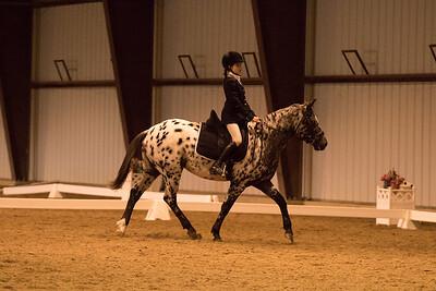 Horse 626