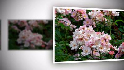 Rose Garden_2016
