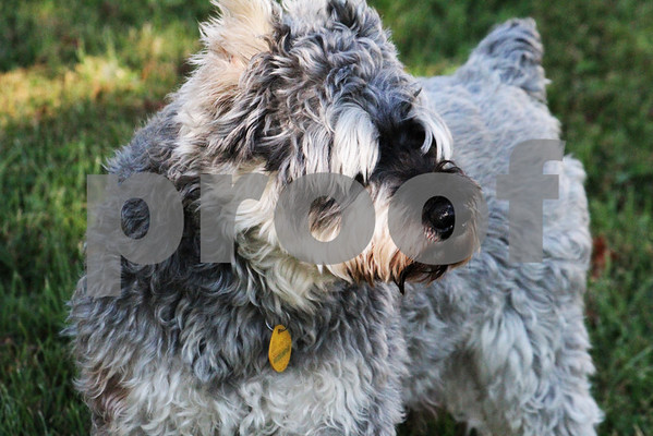 Rocky - Pets by AGT Photography