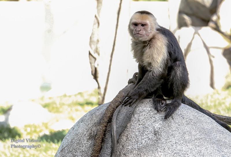 2016-07-17 Fort Wayne Zoo 023LR.jpg