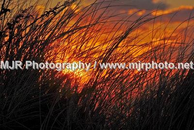 Landscapes, Gilgo Beach, NY, (1-20-07)