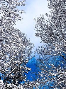 Christmas - Fine Art Photography