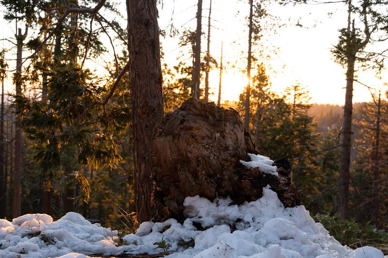 Yosemite-31.jpg