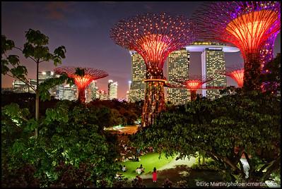 SINGAPOUR JUNGLE URBAINE