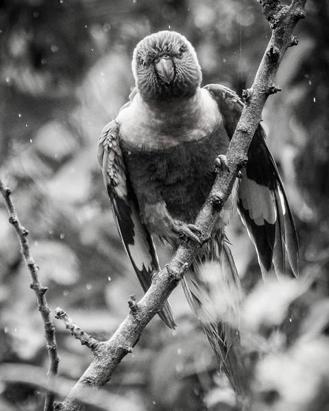 121818  birds  _19.JPG