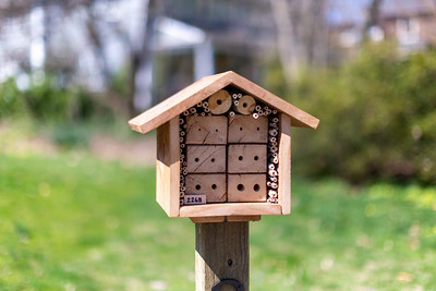 Bee hotels