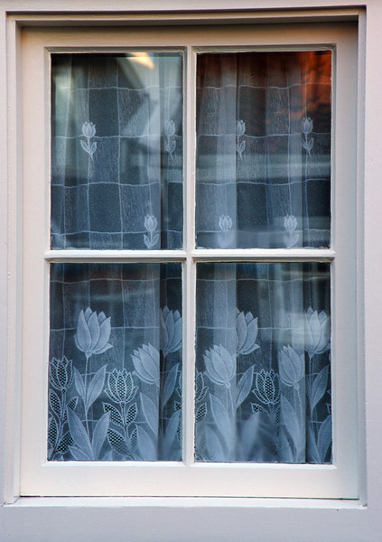 Tulip Lace Curtains