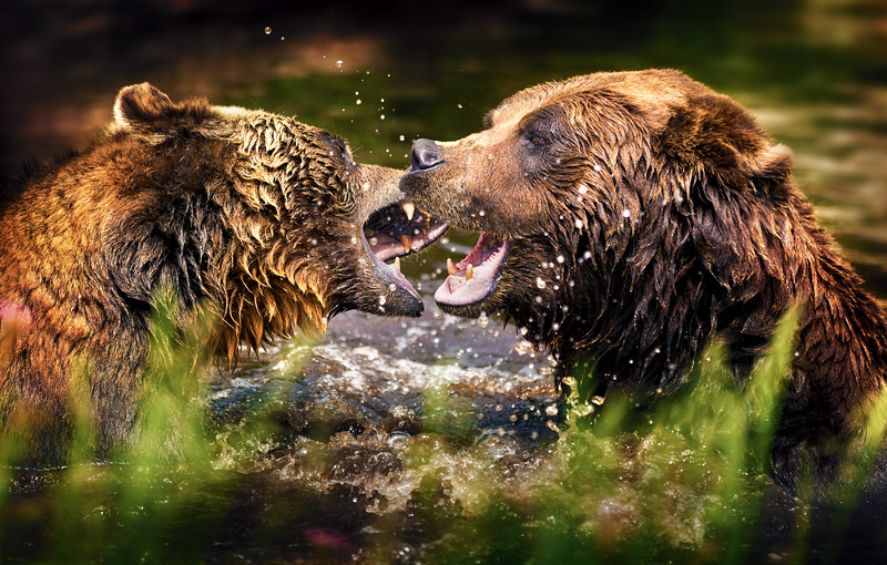 Fighting Bears.jpg