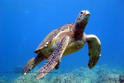 turtles (亀)
