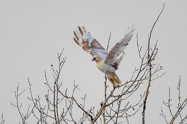 3 Birds 2016