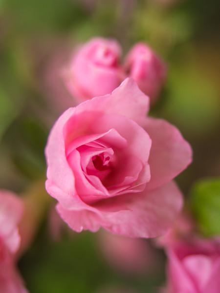 Recent FlowerPhotos