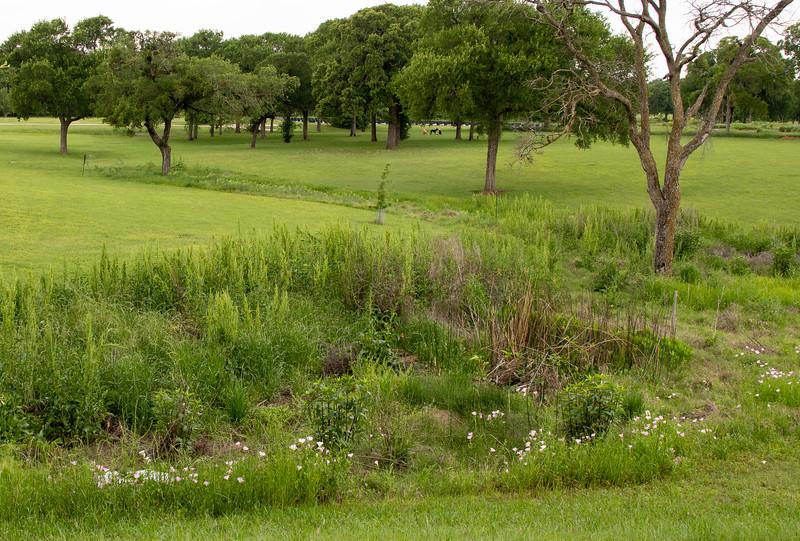Green Acres-01408.jpg