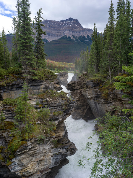 Waterfalls in forest with mountain in the background, Athabasca Falls, Saskatchewan River Crossing, Icefields Parkway, Jasper, Alberta, Canada