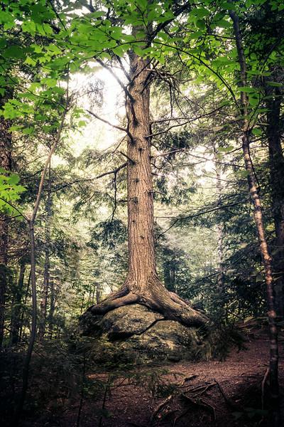 Epic Tree.jpg