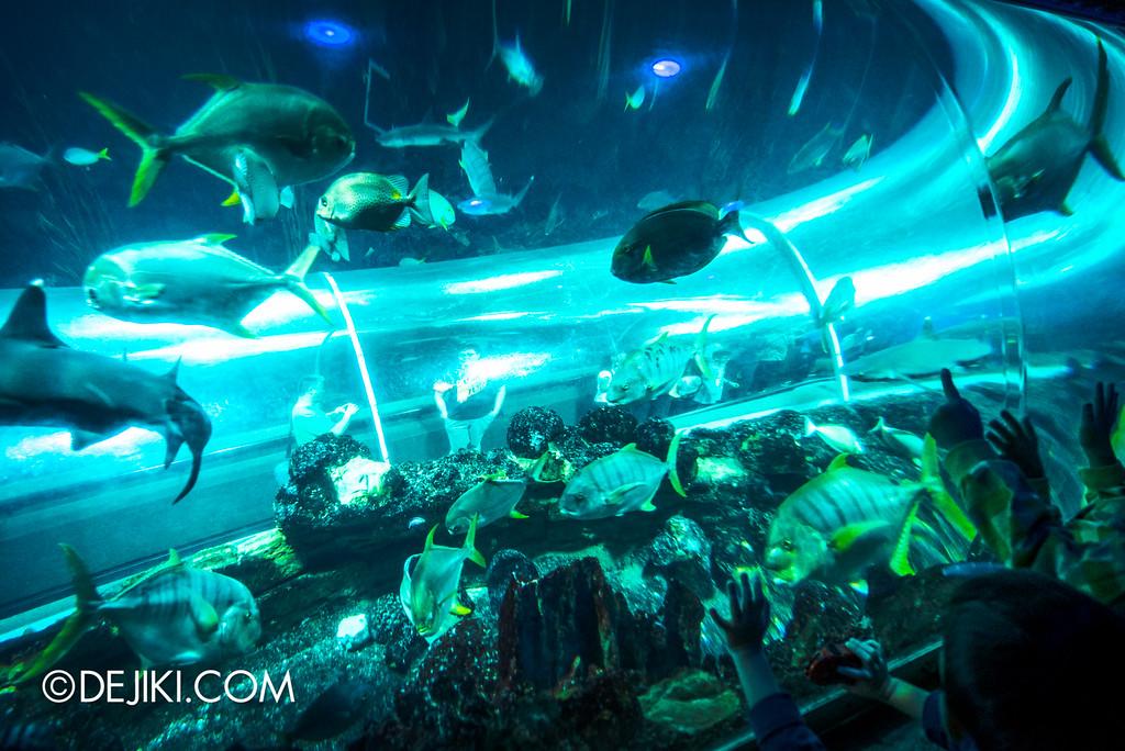 Underwater World Singapore - Tunnel Window