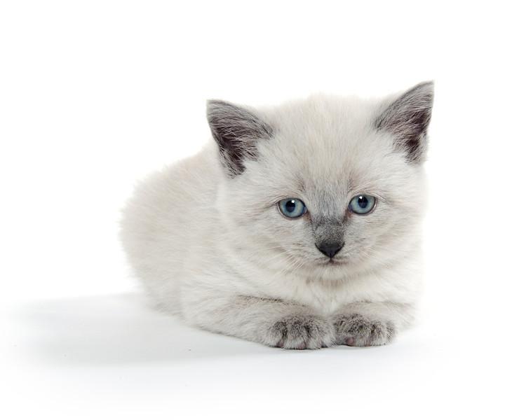 Cute baby kitten on white