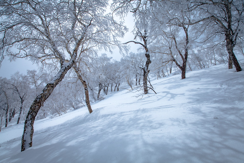 Ski Niseko Japan-3.jpg