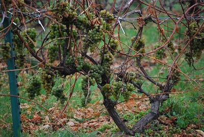 2009.10.31 - Sand Hill Cranes: Haehnle Sanctuary