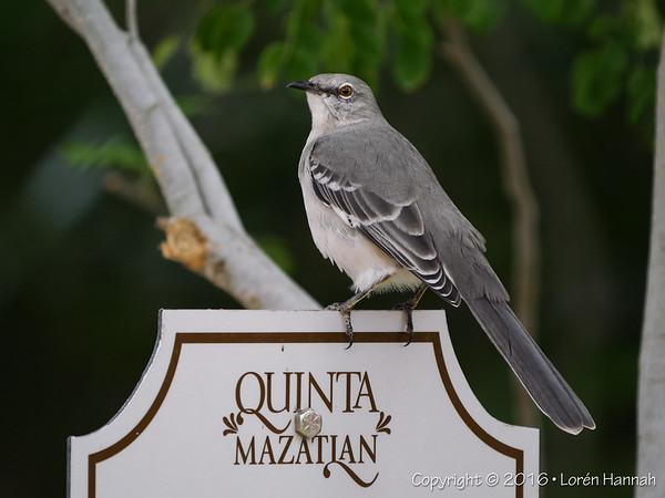 10/25/16 Quinta Mazatlan - McAllen, TX